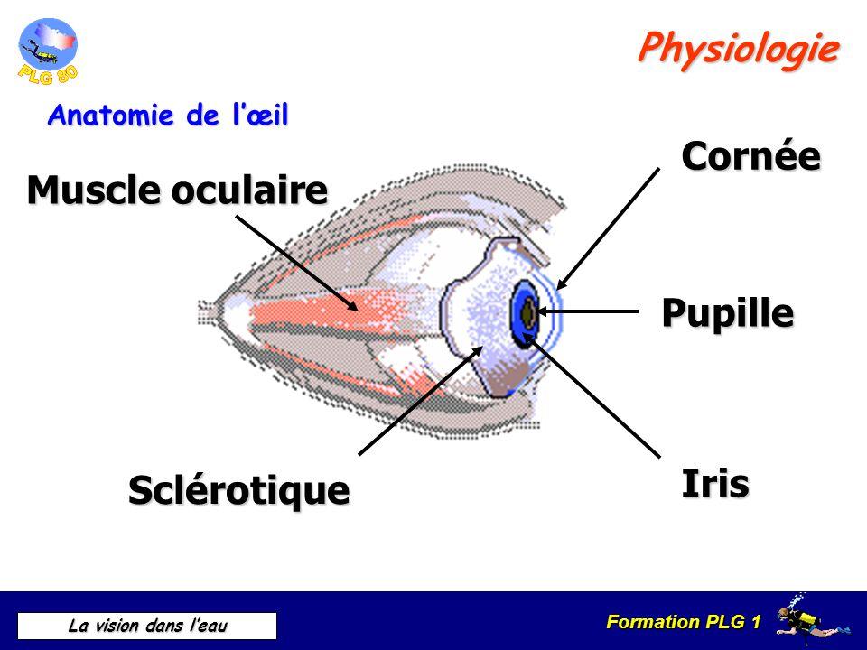 Erfreut Anatomie Und Physiologie Des Lymphsystems Und Immunität ...
