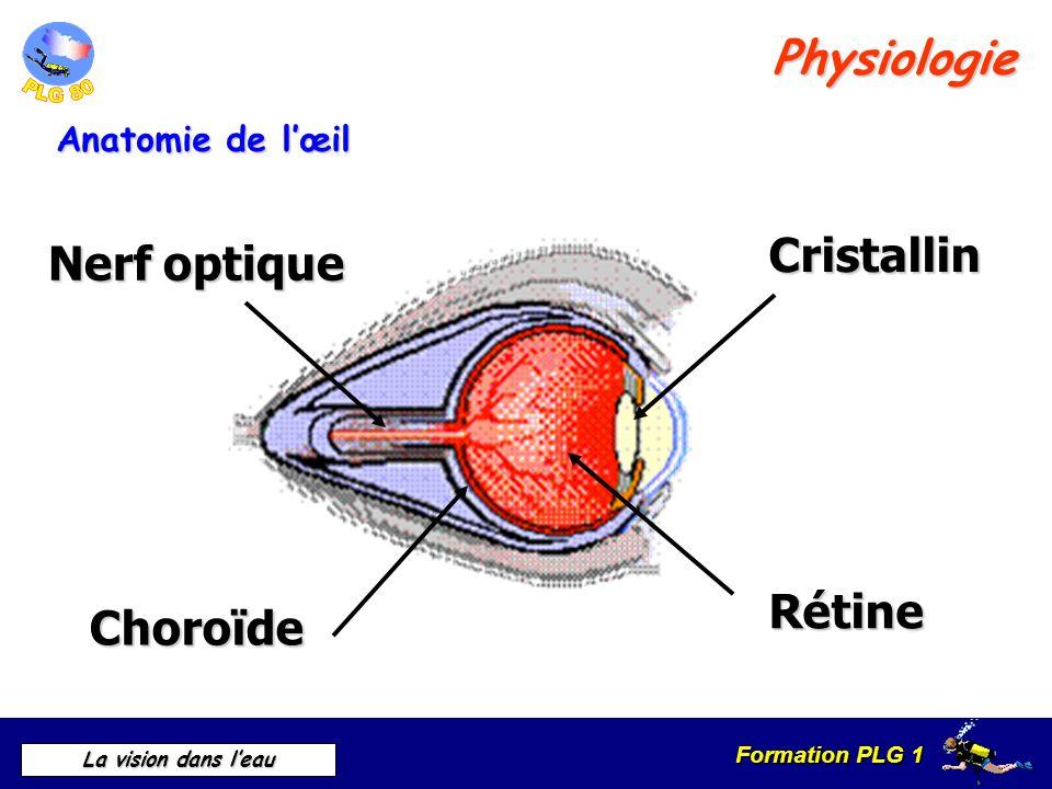 Physiologie Cristallin Nerf optique Rétine Choroïde Anatomie de l'œil
