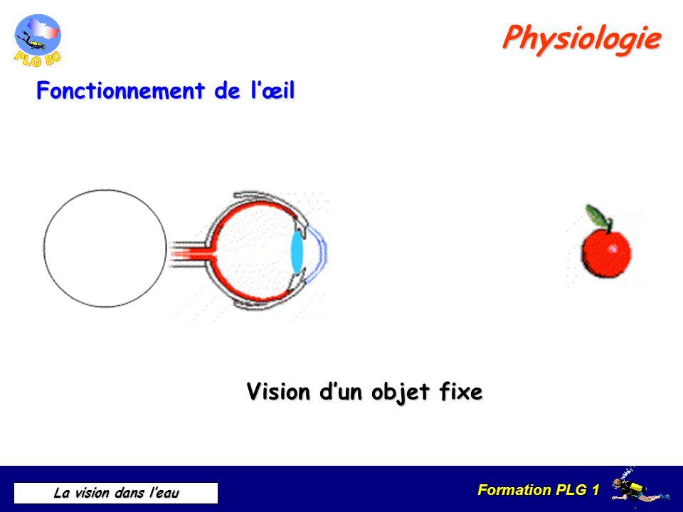 Physiologie Fonctionnement de l'œil Vision d'un objet fixe