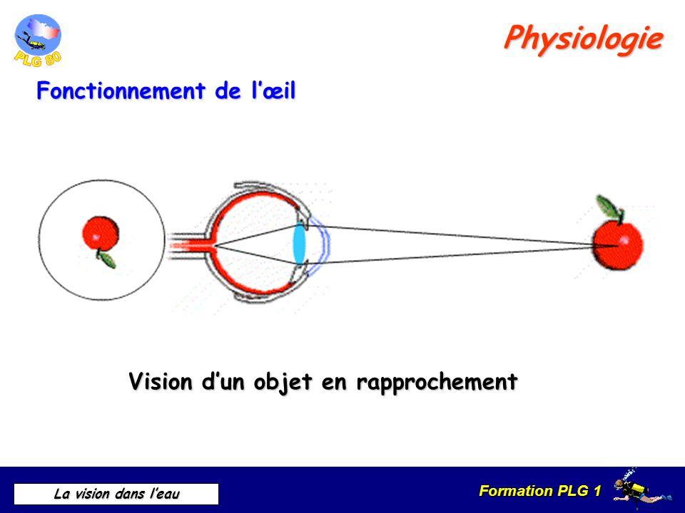 Physiologie Fonctionnement de l'œil Vision d'un objet en rapprochement