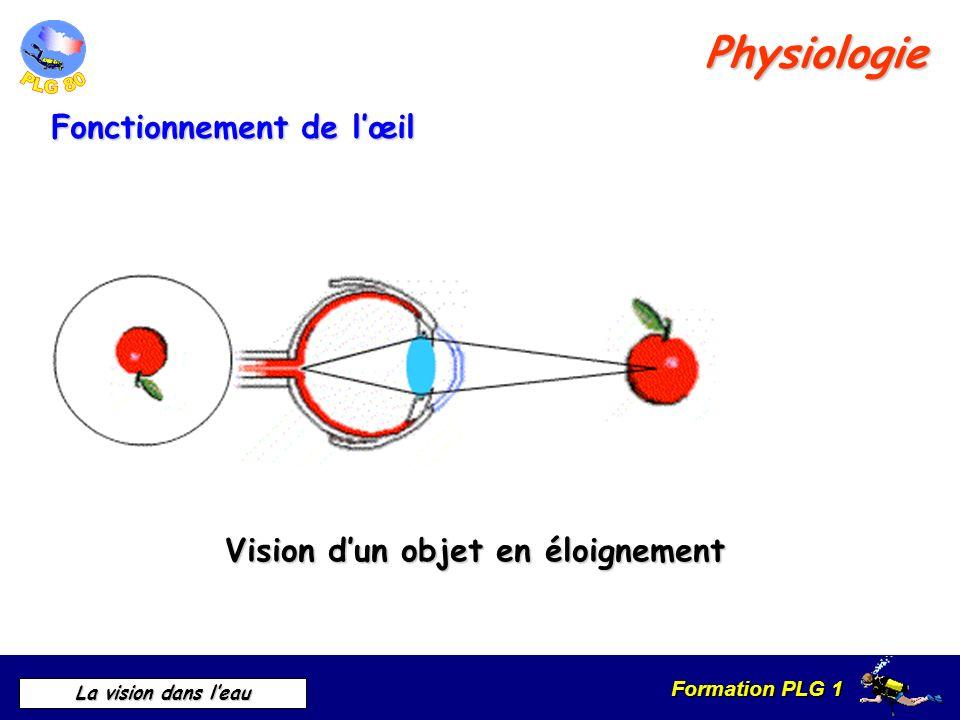 Physiologie Fonctionnement de l'œil Vision d'un objet en éloignement