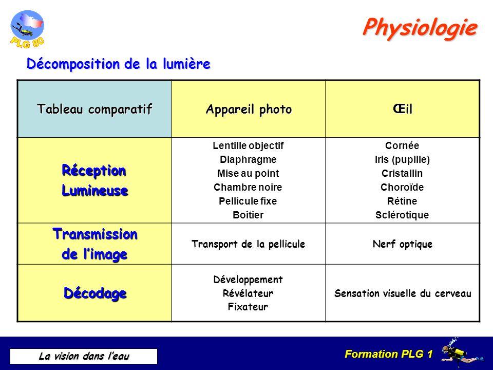 Physiologie Décomposition de la lumière Réception Lumineuse