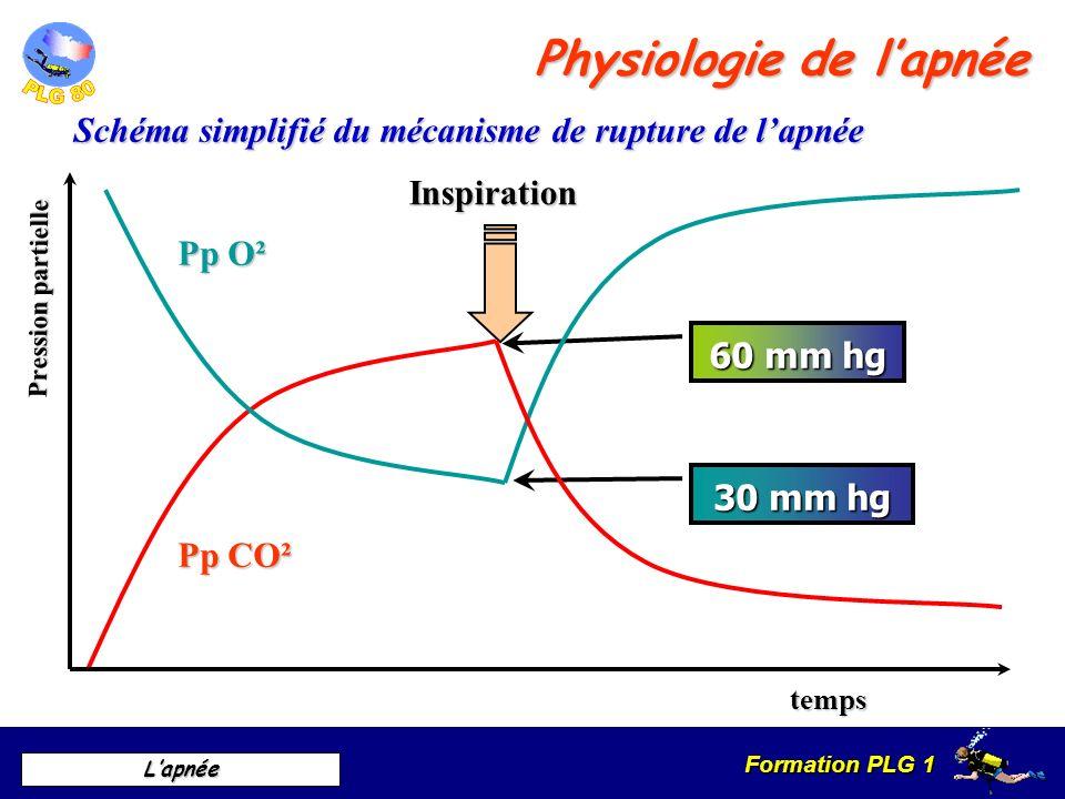 Schéma simplifié du mécanisme de rupture de l'apnée