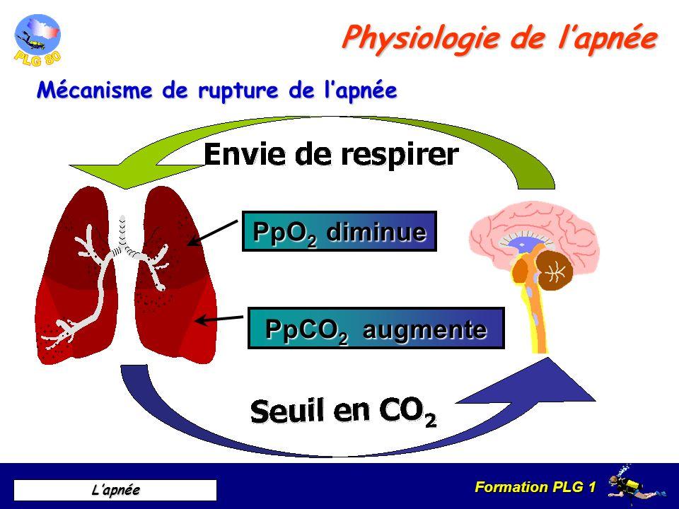 Physiologie de l'apnée