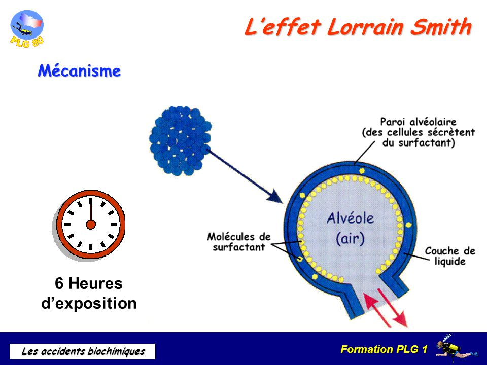 L'effet Lorrain Smith Mécanisme 6 Heures d'exposition
