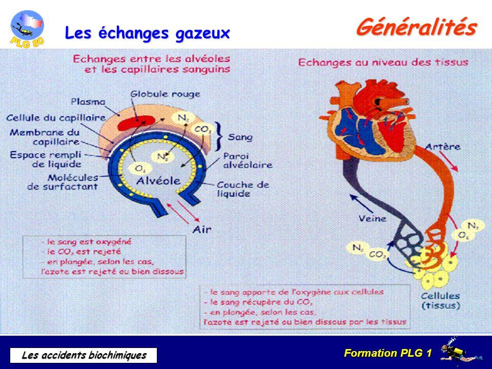Généralités Les échanges gazeux A. Etape sanguine : « l hématose »