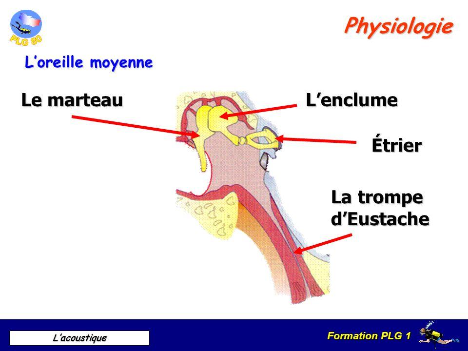 Physiologie Le marteau L'enclume Étrier La trompe d'Eustache