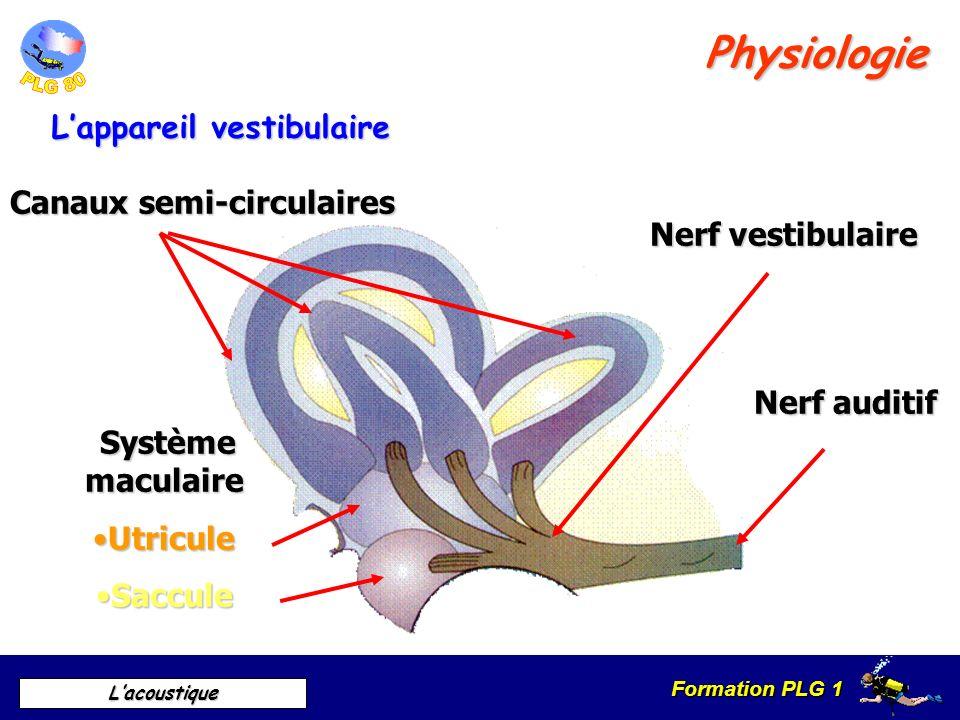 Physiologie L'appareil vestibulaire Canaux semi-circulaires