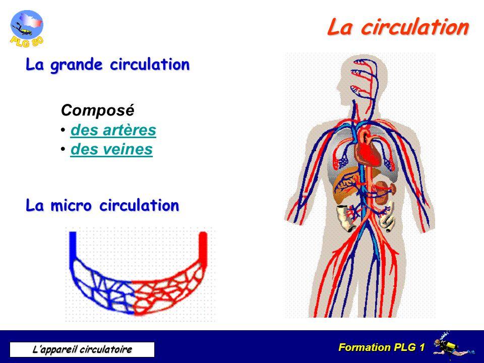 La circulation La grande circulation Composé des artères des veines