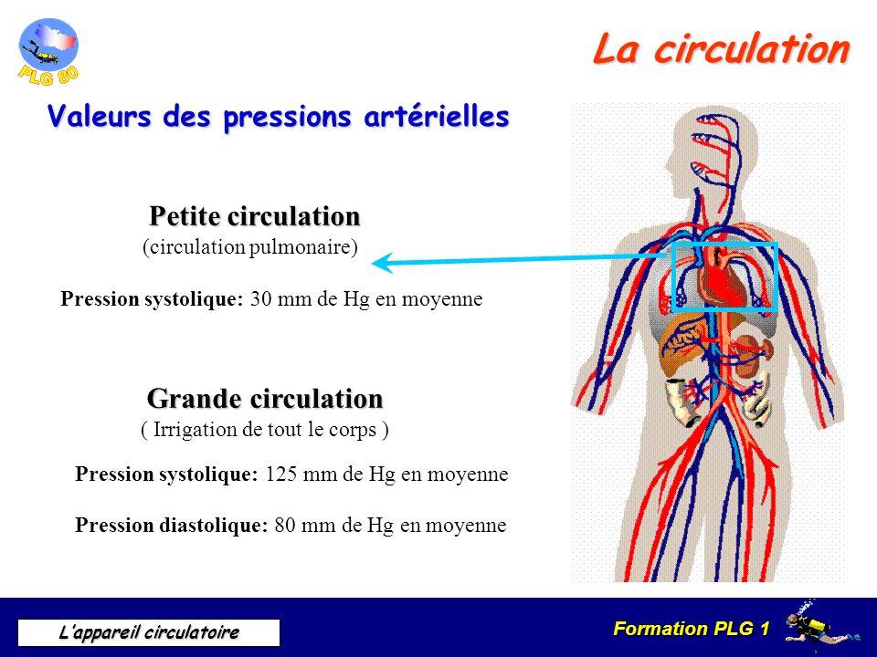 La circulation Valeurs des pressions artérielles Petite circulation