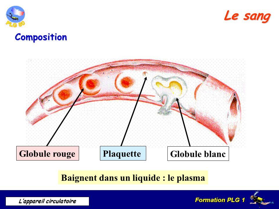 Le sang Composition Plaquette Globule rouge Globule blanc