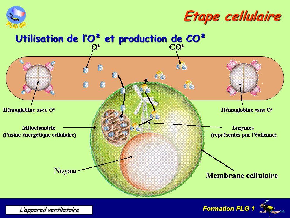 Etape cellulaire Utilisation de l'O² et production de CO²