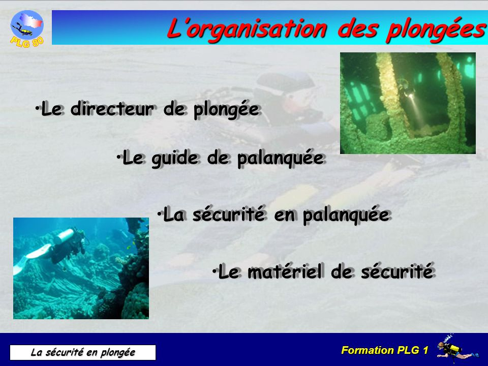 L'organisation des plongées