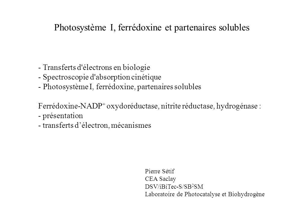 Photosystème I, ferrédoxine et partenaires solubles