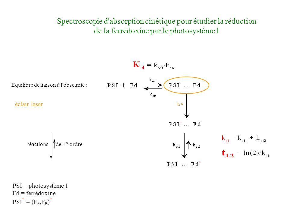 Spectroscopie d absorption cinétique pour étudier la réduction de la ferrédoxine par le photosystème I