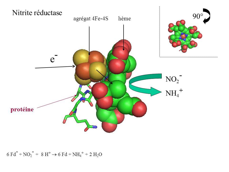 e- Nitrite réductase 90° NO2- NH4+ protéine agrégat 4Fe-4S hème