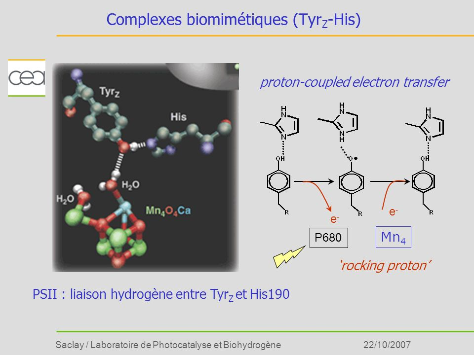 Complexes biomimétiques (TyrZ-His)