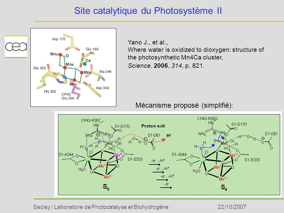 Site catalytique du Photosystème II