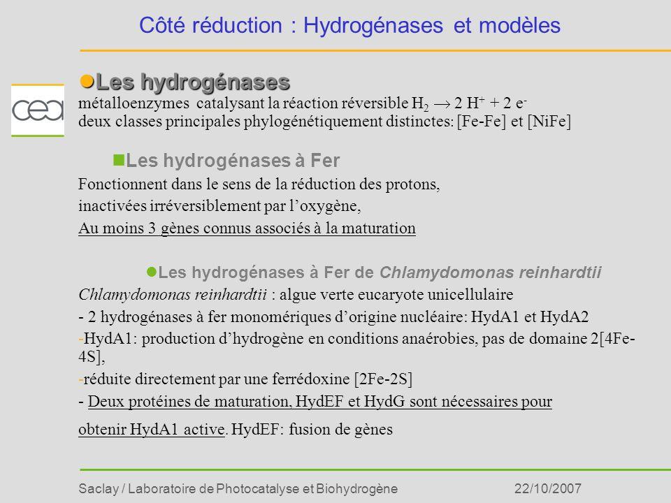 Côté réduction : Hydrogénases et modèles
