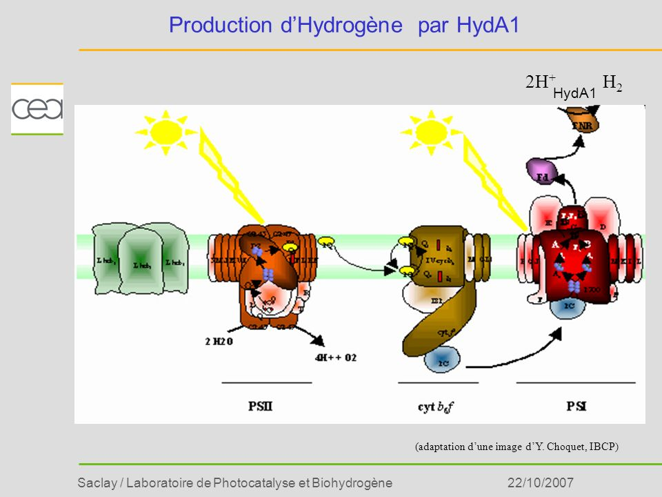 Production d'Hydrogène par HydA1