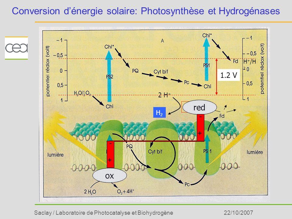 Conversion d'énergie solaire: Photosynthèse et Hydrogénases