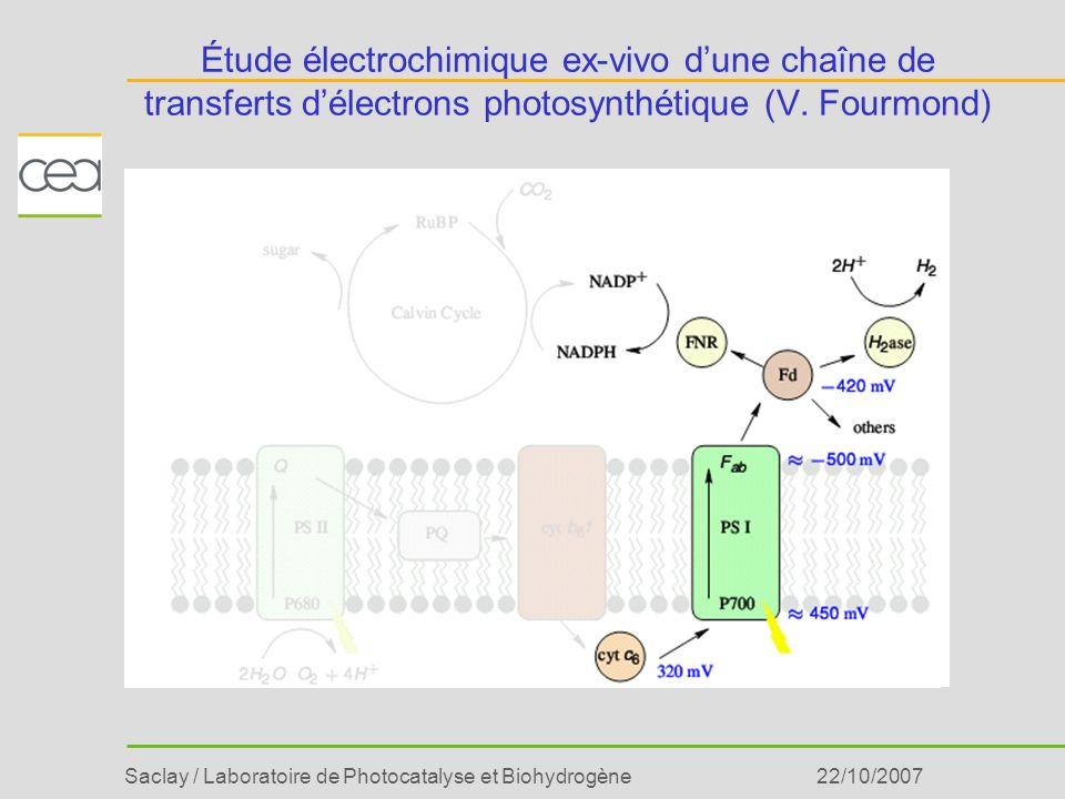 Étude électrochimique ex-vivo d'une chaîne de transferts d'électrons photosynthétique (V. Fourmond)
