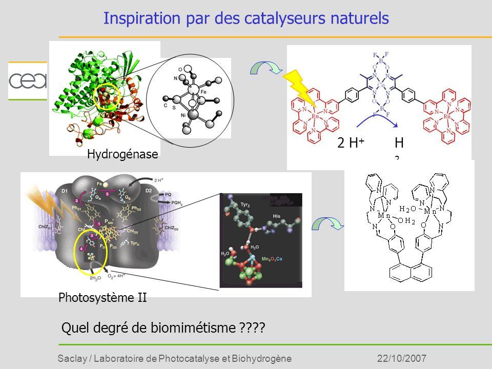 Inspiration par des catalyseurs naturels