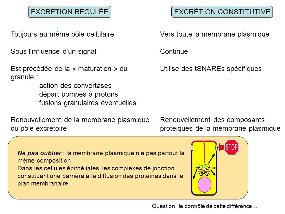 EXCRÉTION CONSTITUTIVE
