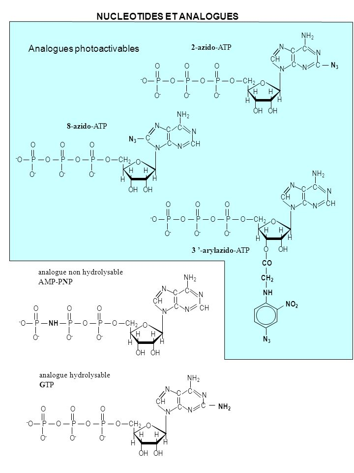 NUCLEOTIDES ET ANALOGUES