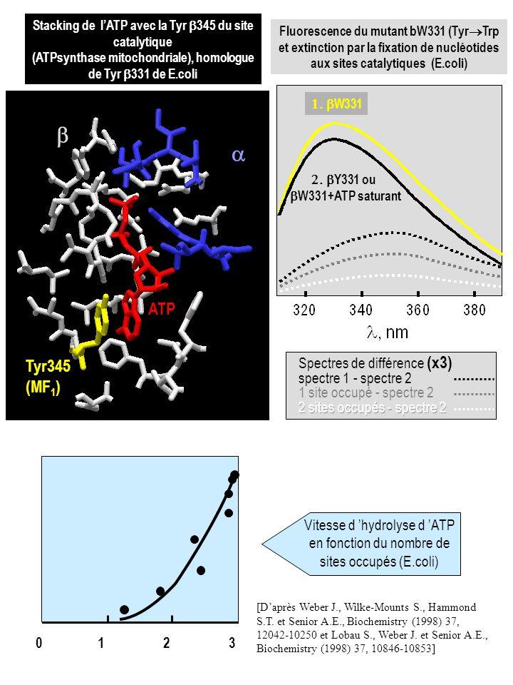 b a ATP Tyr345 (MF1) Spectres de différence (x3) spectre 1 - spectre 2