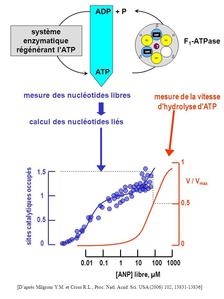 mesure de la vitesse d hydrolyse d ATP