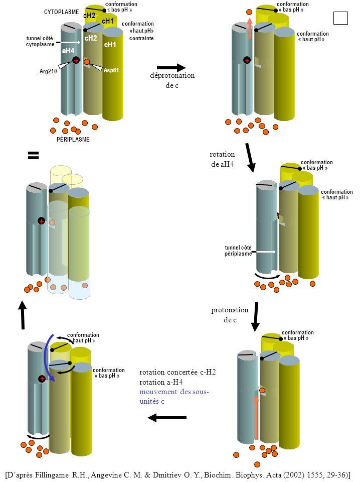 = + cH1 cH2 aH4 + déprotonation de c rotation de aH4 + + protonation