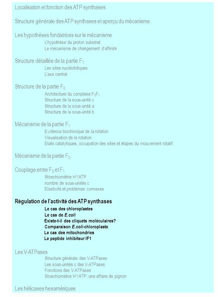 Localisation et fonction des ATP synthases