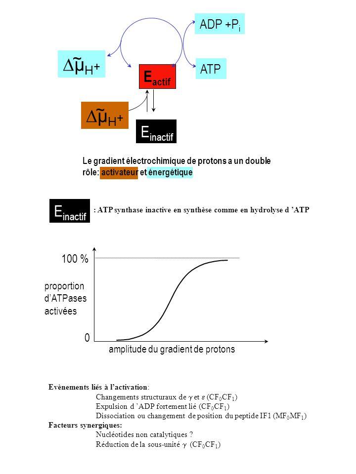 DµH+ Eactif ~ Einactif Einactif ADP +Pi ATP 100 % proportion d'ATPases
