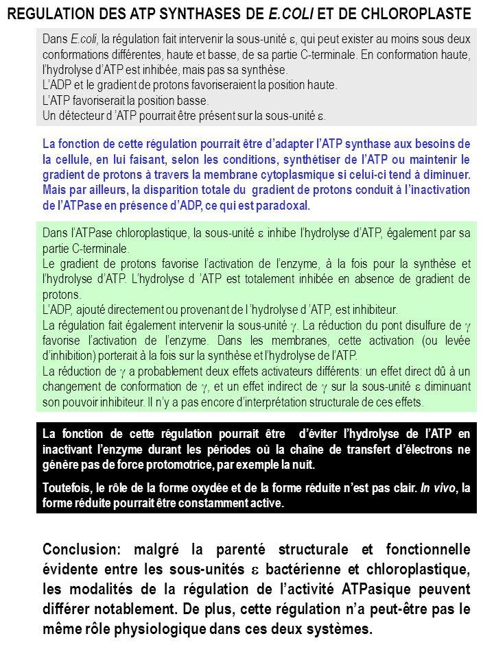 REGULATION DES ATP SYNTHASES DE E.COLI ET DE CHLOROPLASTE