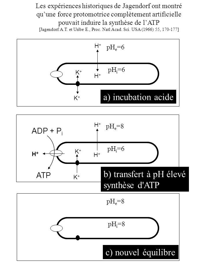 a) incubation acide b) transfert à pH élevé synthèse d ATP