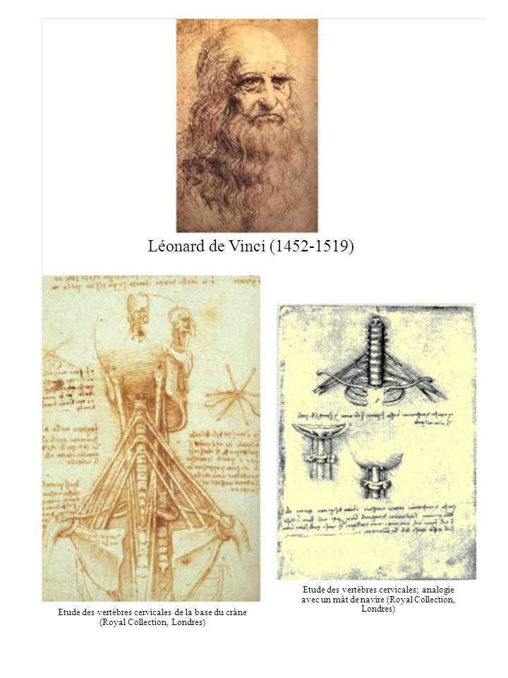 Léonard de Vinci (1452-1519)Etude des vertèbres cervicales; analogie avec un mât de navire (Royal Collection, Londres)