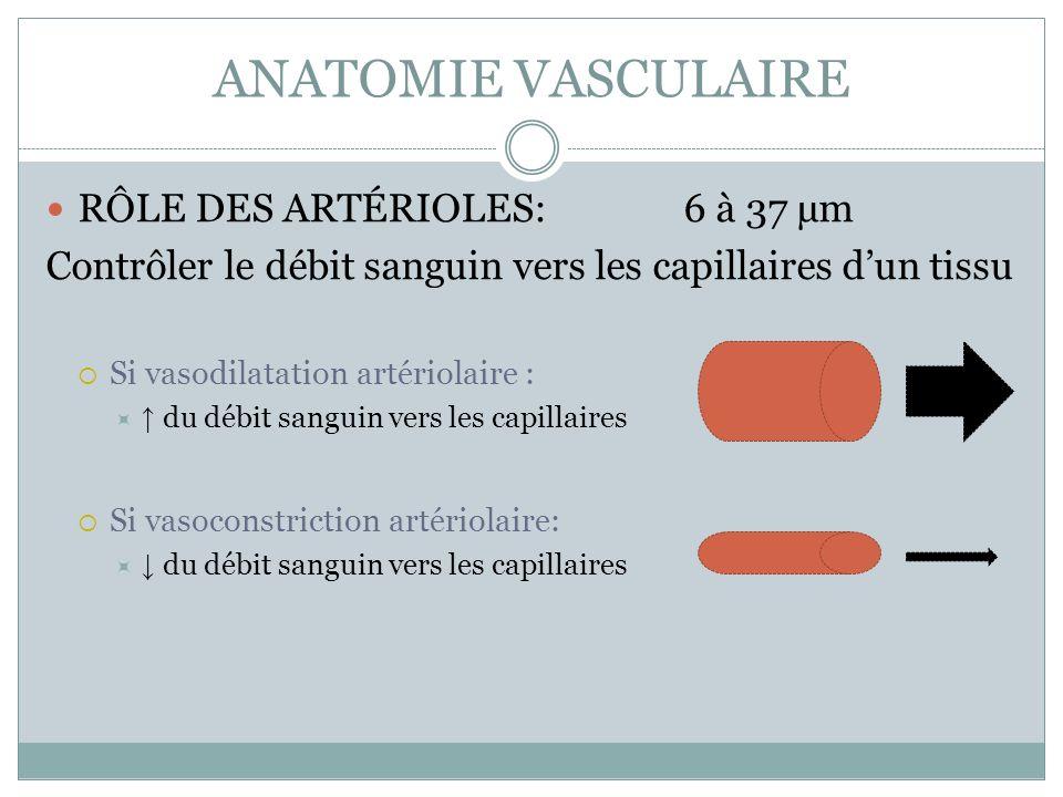 ANATOMIE VASCULAIRE RÔLE DES ARTÉRIOLES: 6 à 37 µm