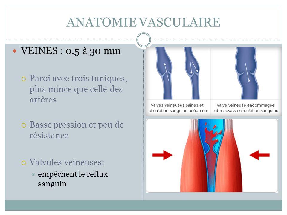 ANATOMIE VASCULAIRE VEINES : 0.5 à 30 mm