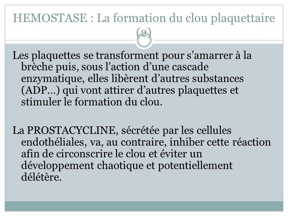 HEMOSTASE : La formation du clou plaquettaire (2)