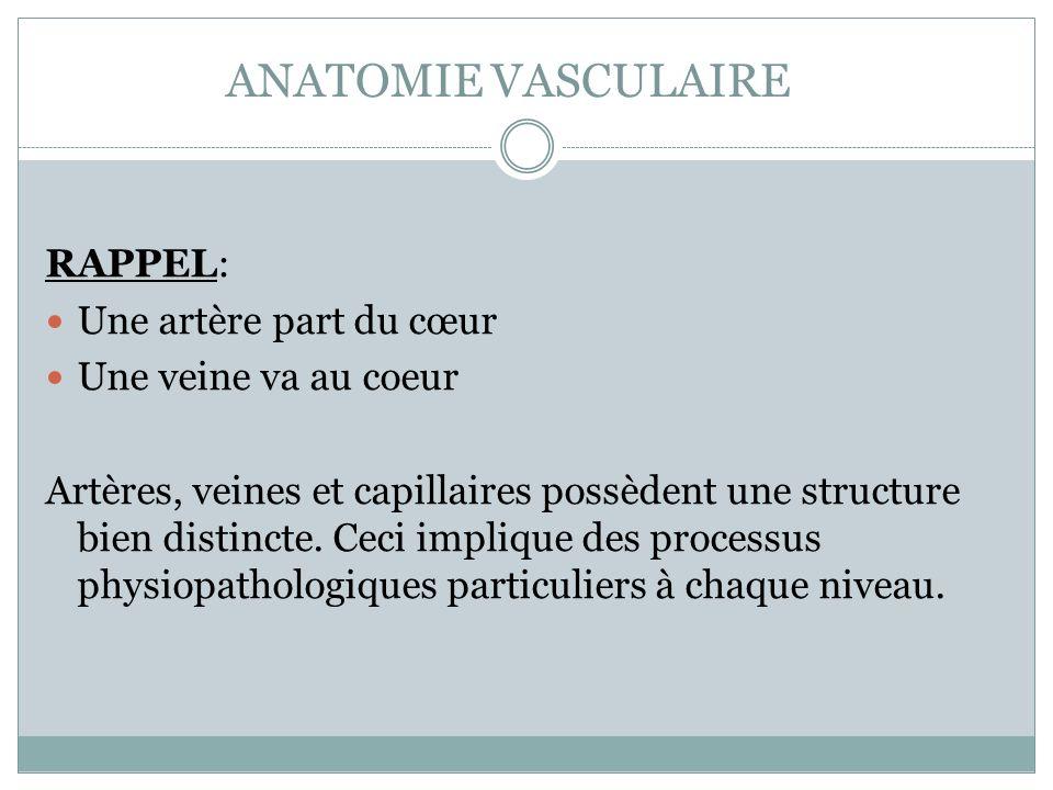 ANATOMIE VASCULAIRE RAPPEL: Une artère part du cœur