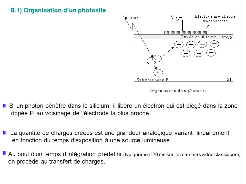 B.1) Organisation d'un photosite