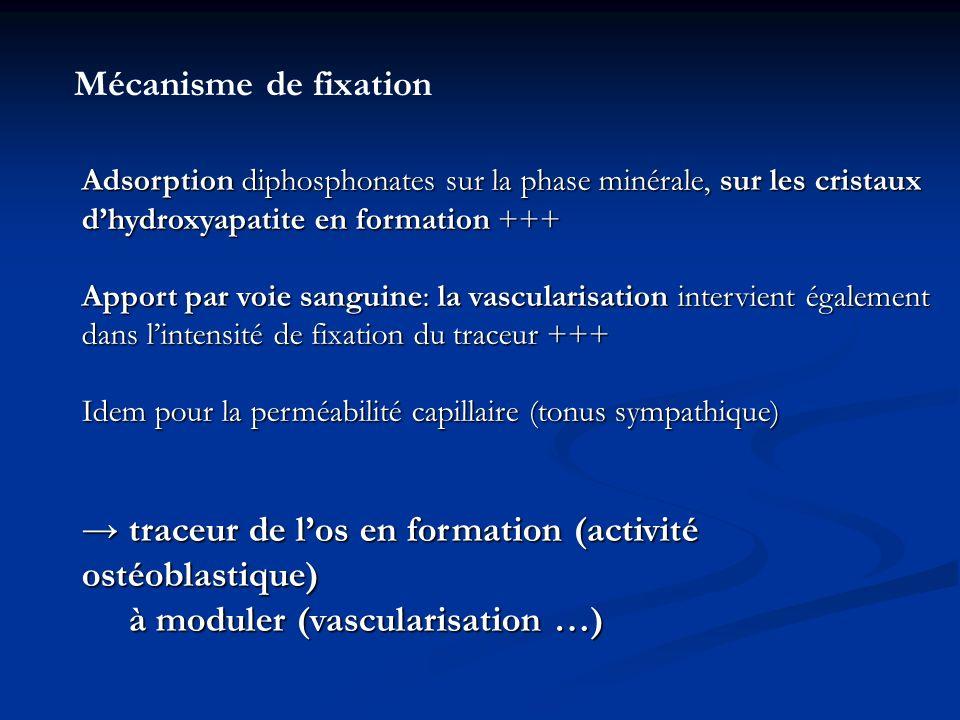 → traceur de l'os en formation (activité ostéoblastique)