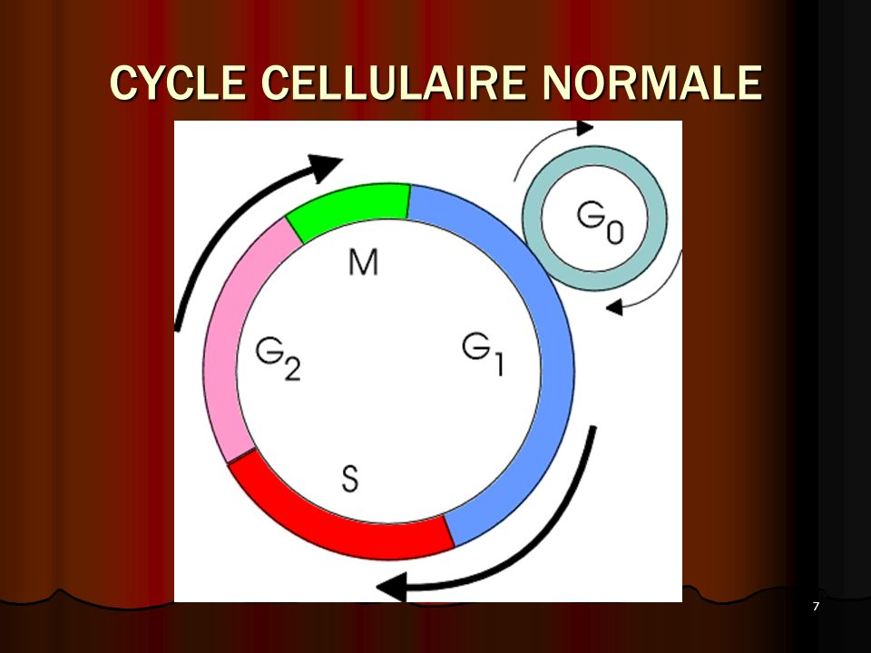 CYCLE CELLULAIRE NORMALE
