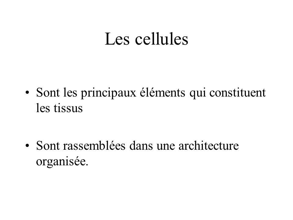 Les cellules Sont les principaux éléments qui constituent les tissus