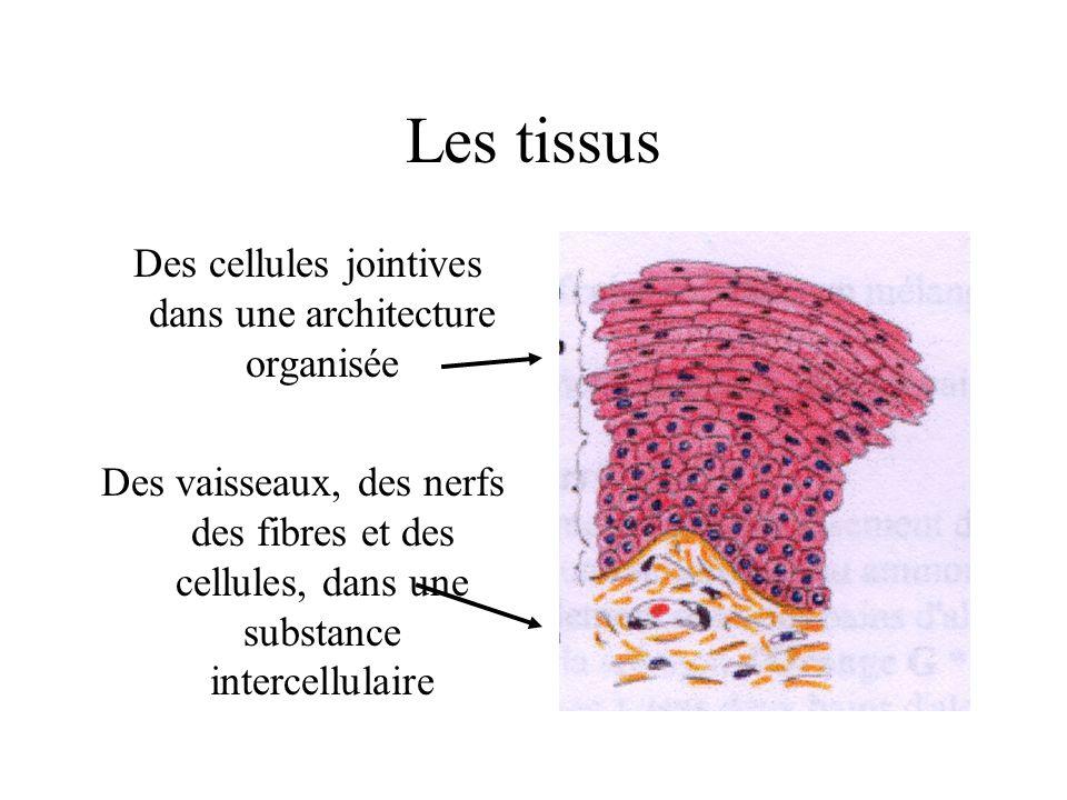 Des cellules jointives dans une architecture organisée