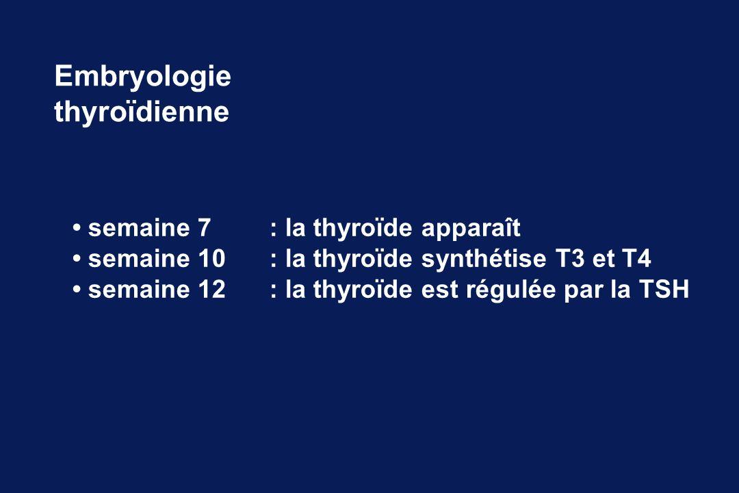 Embryologie thyroïdienne