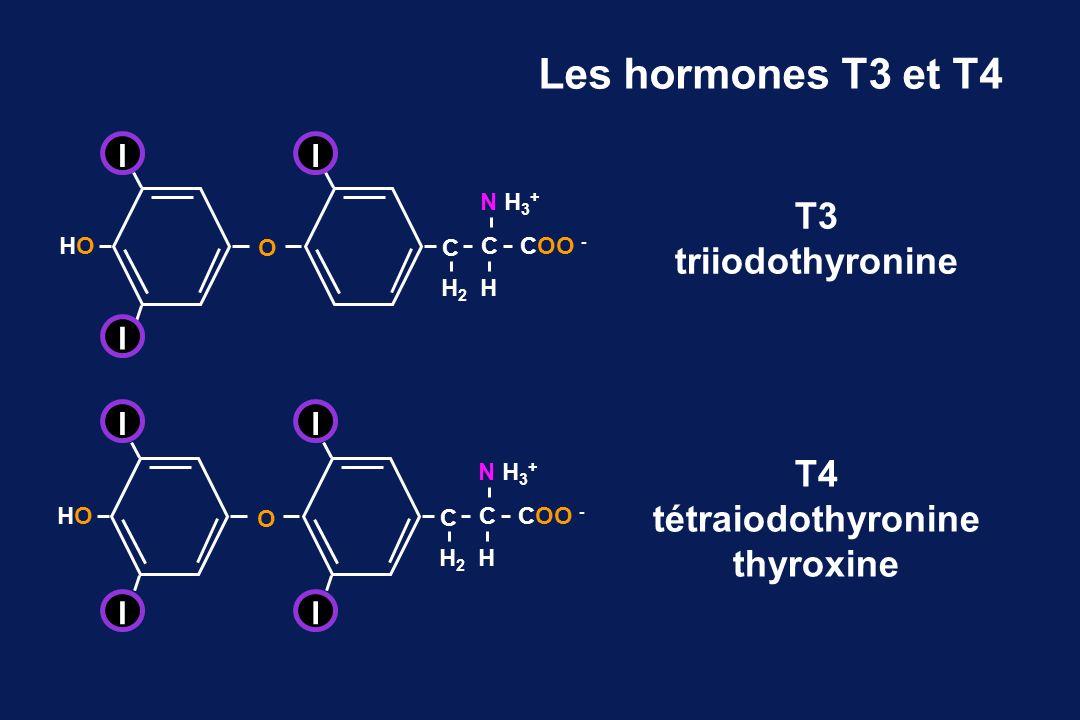 Les hormones T3 et T4 T3 triiodothyronine T4 tétraiodothyronine