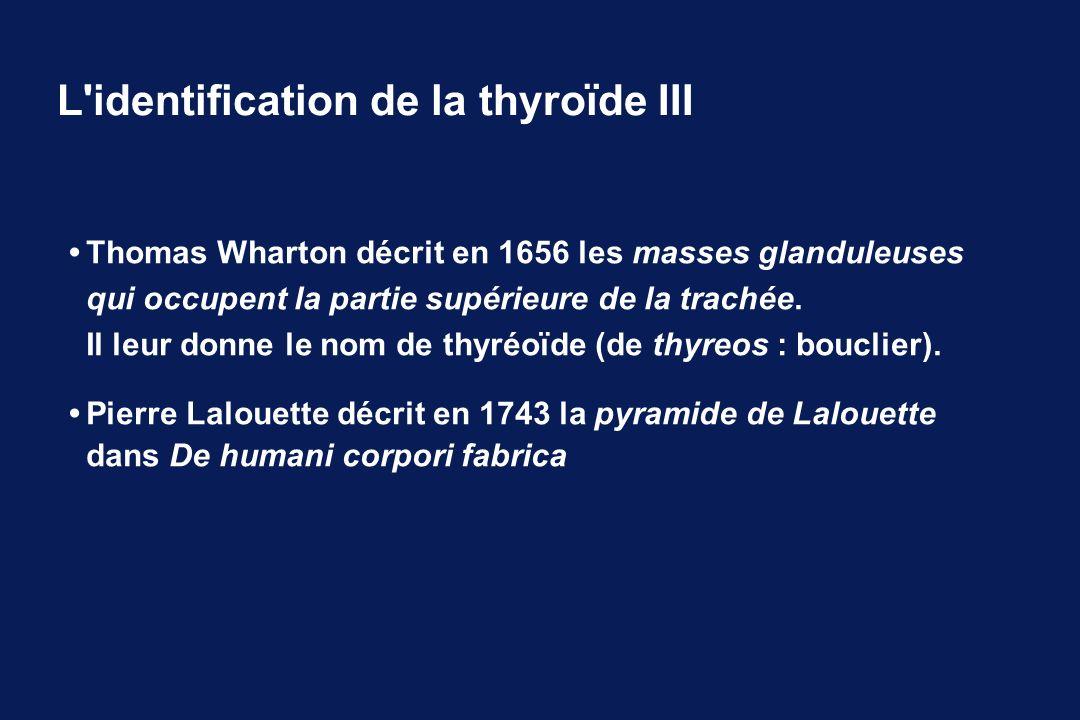 L identification de la thyroïde III
