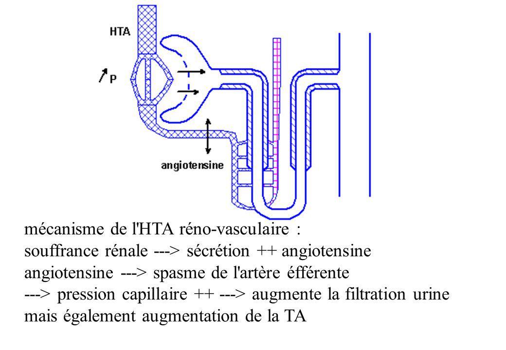 mécanisme de l HTA réno-vasculaire :